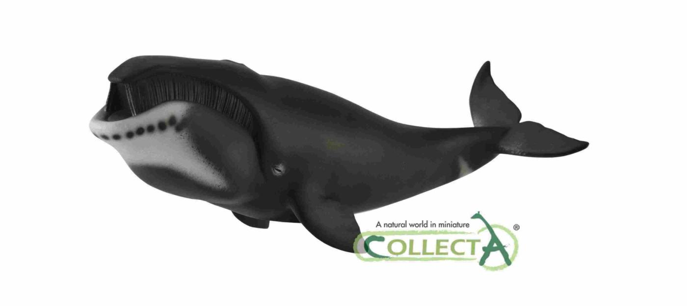 CollectA BLAINVILLE/'s Beaked Whale