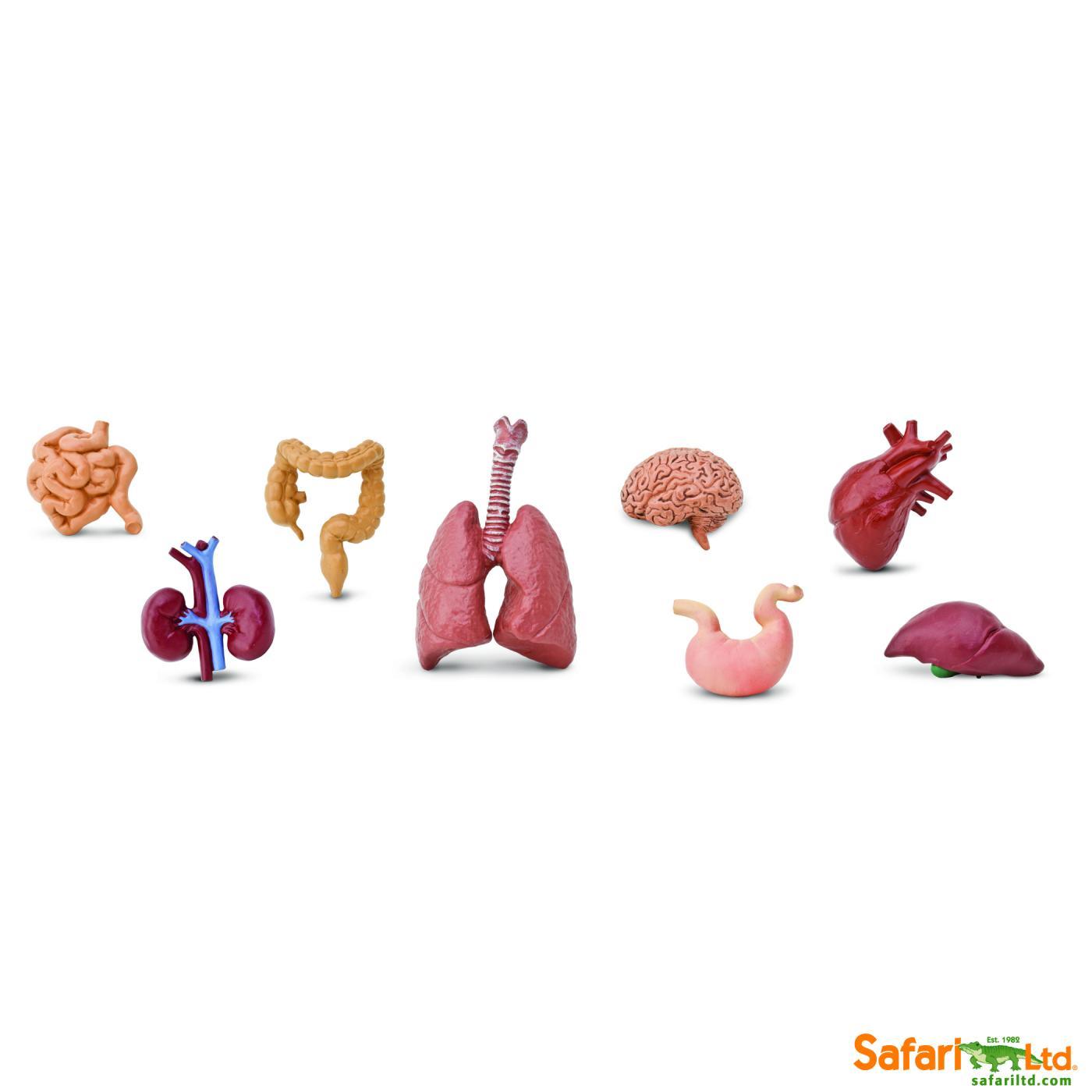 Safari Menschliche Organe 6893 Miniaturen